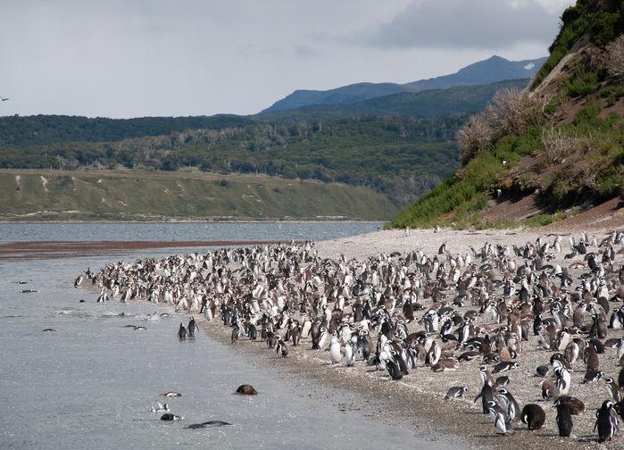 Isla Martillo, Hammer Island.