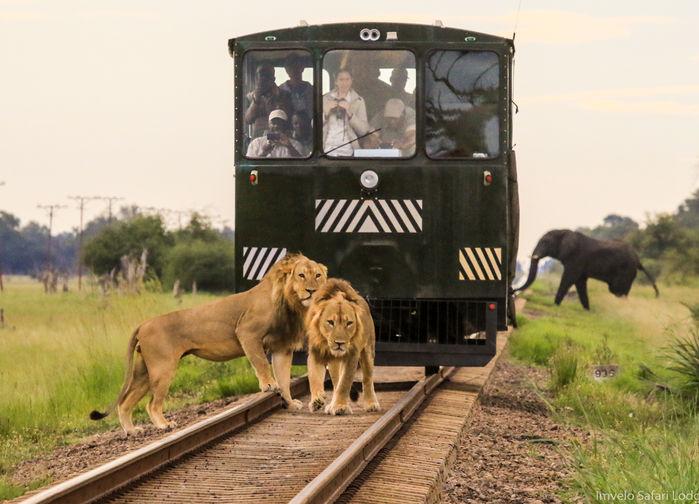 Elephant Express