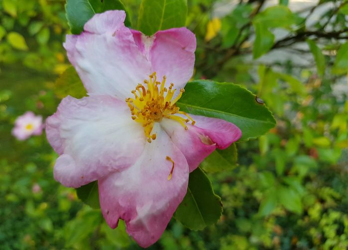 Blomsterprakten i Villa Sandis park