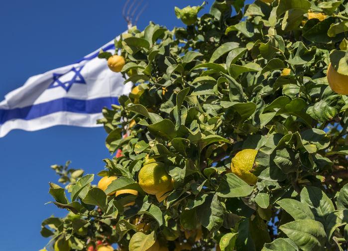 Den israeliska flaggan